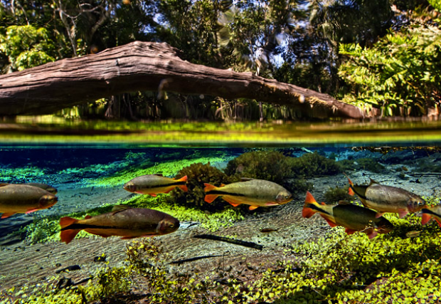 Largest underwater panoramic image 7