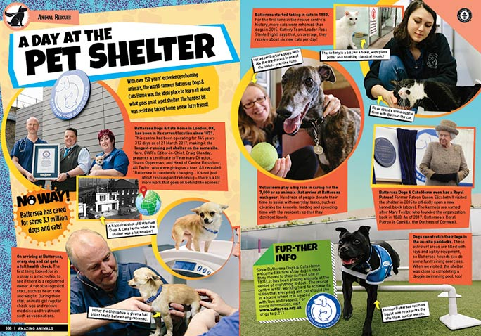 Amazing Animals: A day at the pet shelter