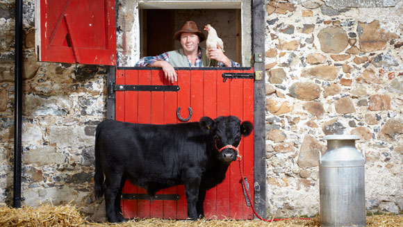 Archie - the world's Shortest Bull - video