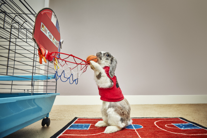 Most basketball slam dunks by a rabbit 5