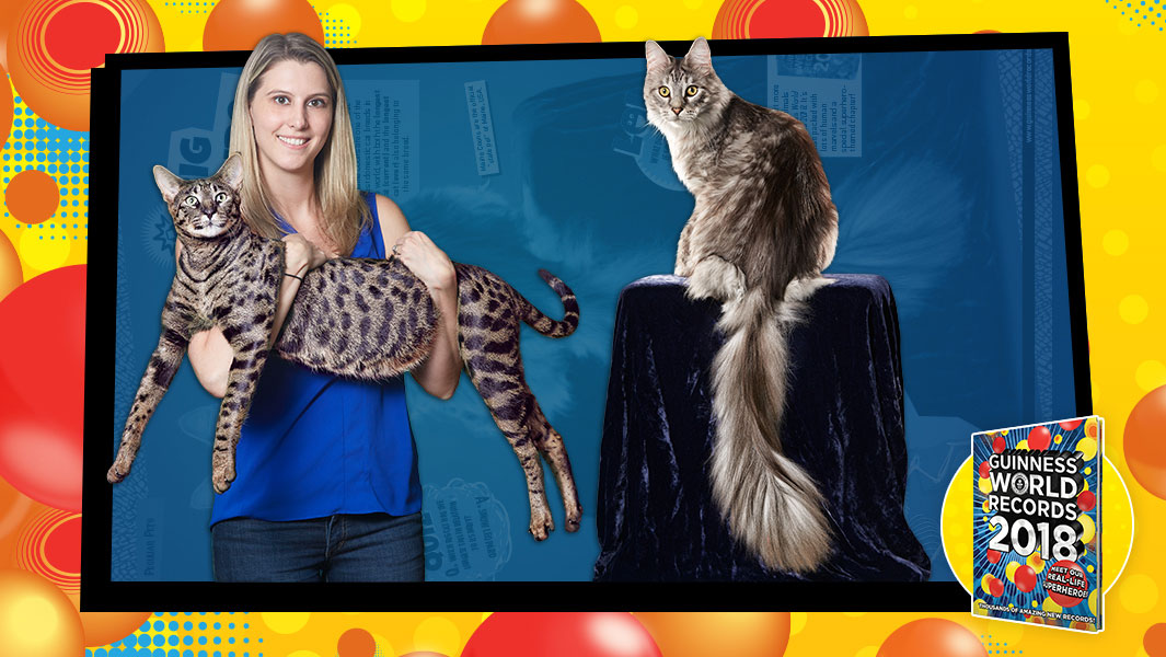 cygnus and arcturus how the tallest cat and the kitty with the longest tail live together - Biggest Cat In The World Guinness 2017