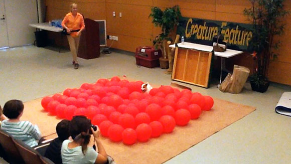 Video: Twinkie the Jack Russell dog has a pop at balloon bursting record
