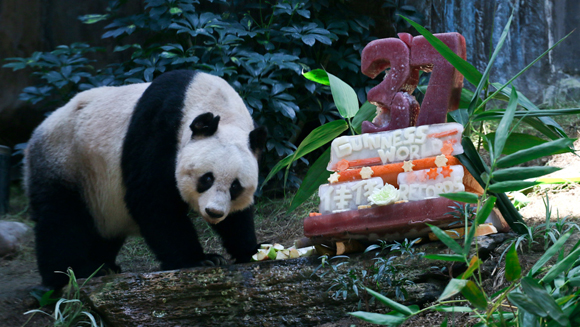Jia Jia the oldest panda ever celebrates her 37th birthday with two new record titles