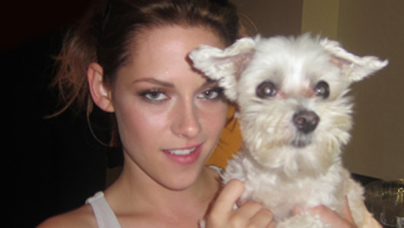 GWR Day: From Kim Kardashian to Kristen Stewart – how Lucky the dog bagged the most celebrity pictures world record