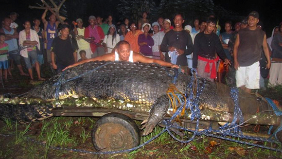Is this monster crocodile the biggest of all time?