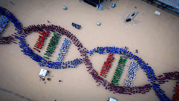 Medical students in Bulgaria break record for largest human DNA helix