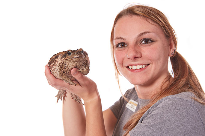 Largest toad