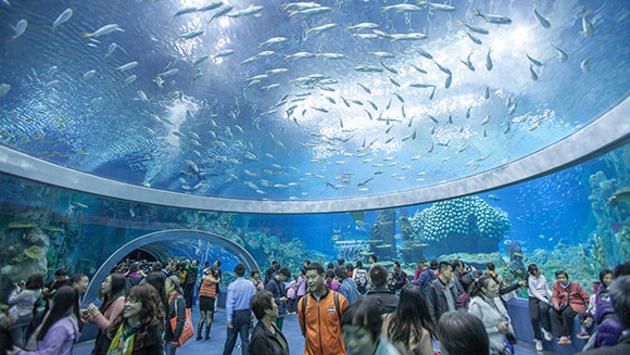 China's Hengqin Ocean Kingdom confirmed as world's largest aquarium as attraction sets five world records