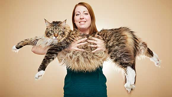 Video: Meet Ludo, the longest cat in the world