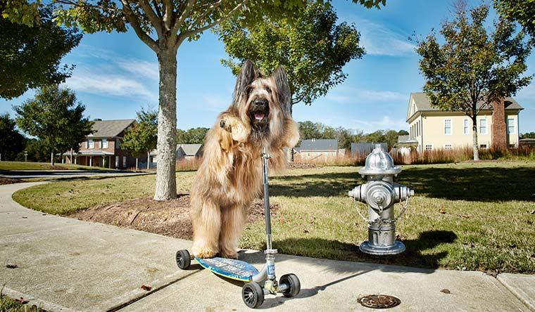 Norman the scooter dog holds the record for the fastest 30 m on a scooter by a dog with a time of 20.77 seconds