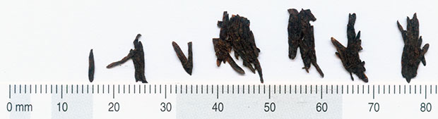 Oldest tea leaves measurements