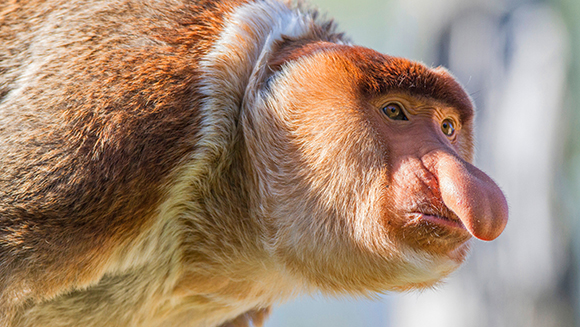 Celebrate the Chinese New Year of the Monkey with these amazing primate records