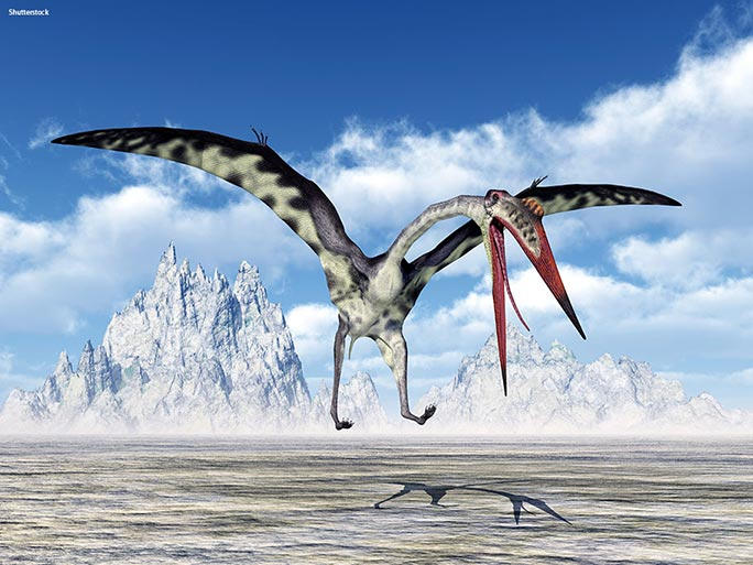 The largest pterosaurs had beaks that measured the same length as an adult human. It's thought that they may have been scavengers, a bit like modern-day vultures