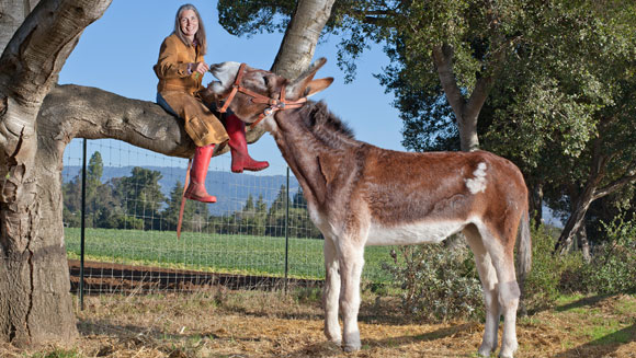 Oklahoma Sam - the world's tallest donkey - video