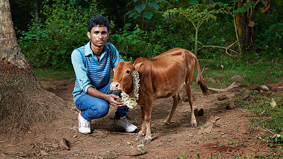 Record Holder Profile Video: Manikyam - the shortest cow in the world