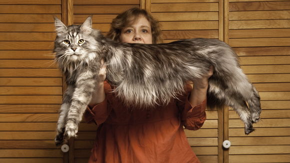 My Story: Robin Hendrickson on the life of Stewie, the world's longest cat