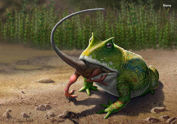 A 2017 study highlighted that the devil toad's strong bite force could have meant that small dinosaurs were on the menu