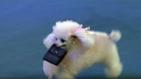dog-with-largest-repertoire-of-tricks-wallet