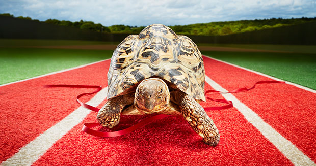 fastest-tortoise-facing-front