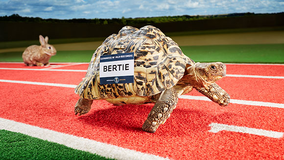 Record Holder Profile Video: Bertie the fastest tortoise