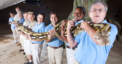 The longest snake in captivity was Fluffy, a 7.3-m-long (24 ft) reticulated python who held the record from 2009 to 2010