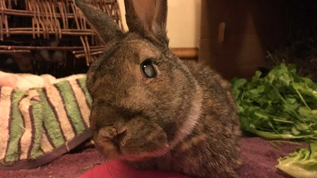 Meet Mick, the world's oldest rabbit who is 16 years old