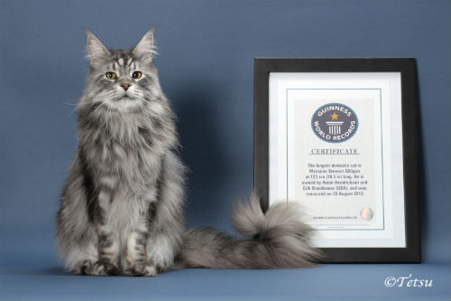 my story robin hendrickson on the life of stewie the world s - Biggest Cat In The World Guinness 2012