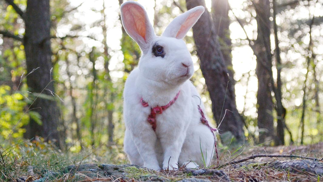Multi-talented rabbit leaps into the record books