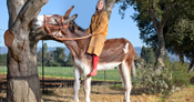 Oklahoma Sam was the tallest donkey who measured 15.3 hands (160.02 cm; 5 ft 3 in) in 2011