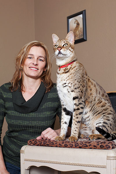 A History Of Big Cats As Another Maine Coon Becomes The World S
