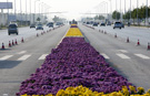Longest carpet of flowers laid in China