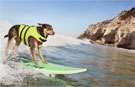 Video: Meet Abbie Girl –the record-breaking surfing dog