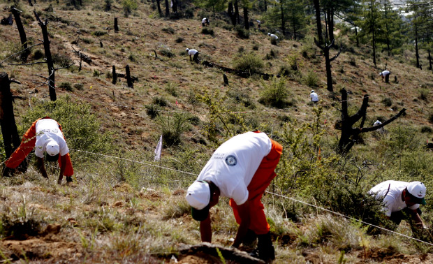 BEGIN Buthan Most trees planted in one hour Guinness World Records Logo