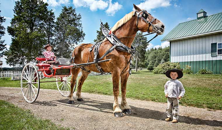 Big Jake is the tallest horse living standing at 20 hands 2.75 in tall (210.19 cm, 82.75 in), without shoes