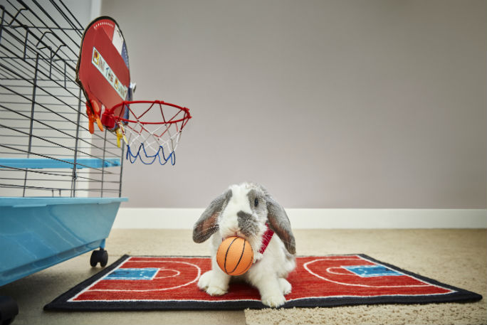 Most basketball slam dunks by a rabbit 2
