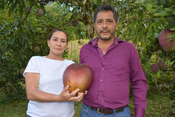 1-Colombian-Farmers-with-the-heaviest-mango