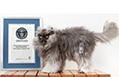 Colonel Meow, the cat with the longest fur, makes it into new Guinness World Records™ 2014 Book