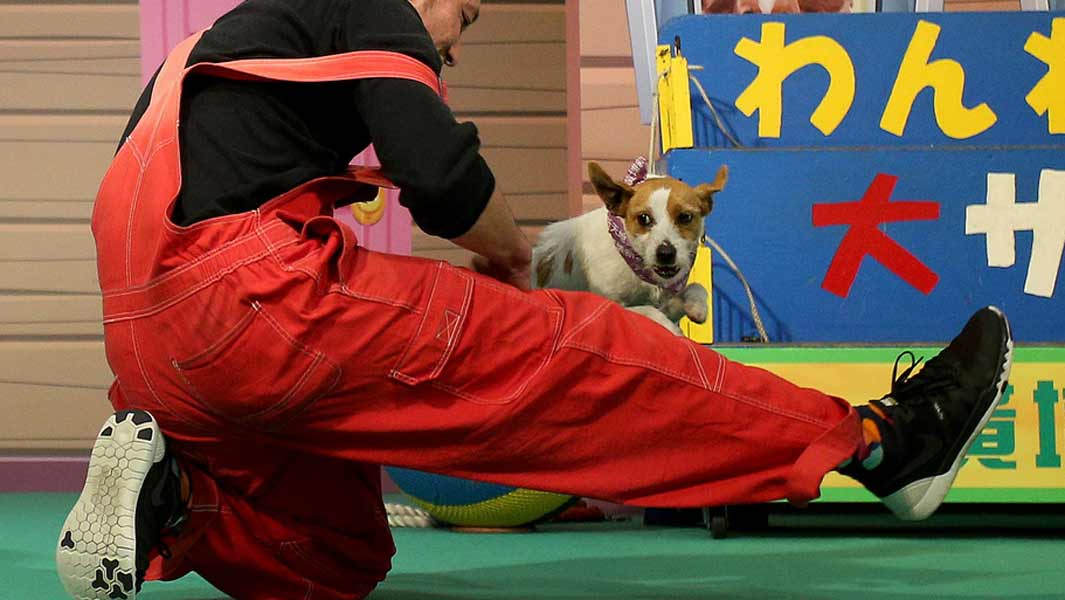 Dog and owner break leg-jumping record to help raise awareness of abandoned animals