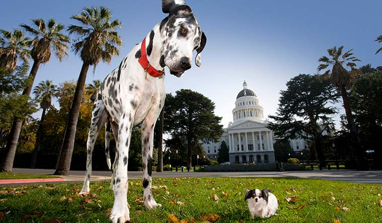 Gibson, a harlequin great Dane, was the tallest dog ever from 2004-2009