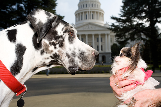 Gibson-former-tallest-dog-guinness-world-records-60th-nose-to-nose-with-booboo