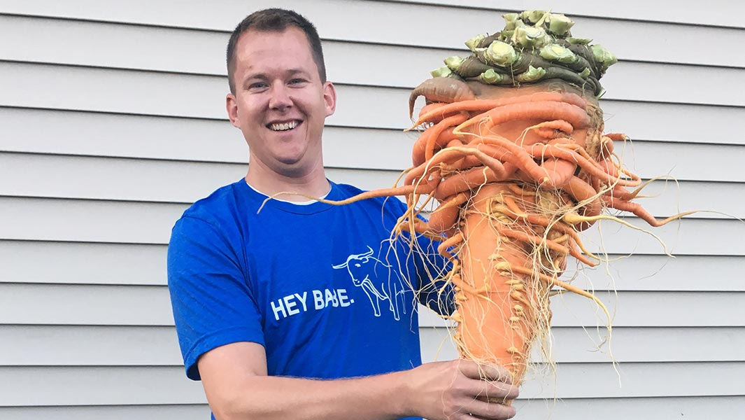 How to grow the world's heaviest carrot