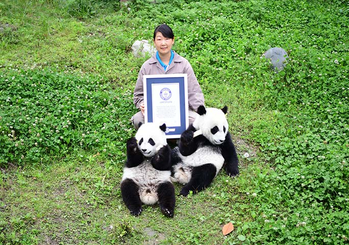 He He and Mei Mei receive their GWR certificate, along with Feng Li – Head of Animal Management at the kindergarten in Shenshuping Panda Base