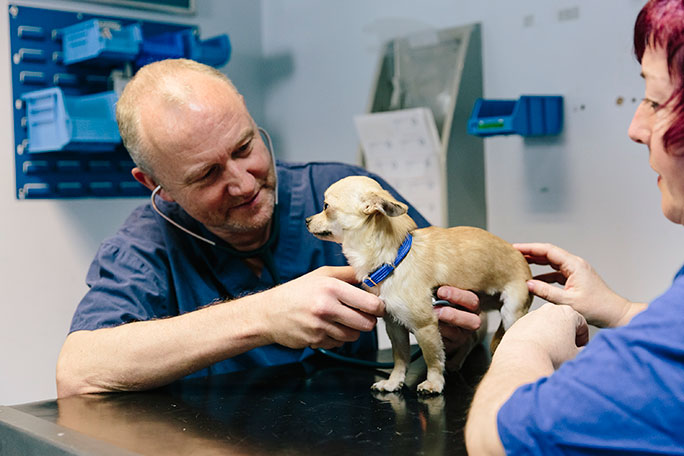 New arrival Honey gets a check up from the Head Vet at the Home