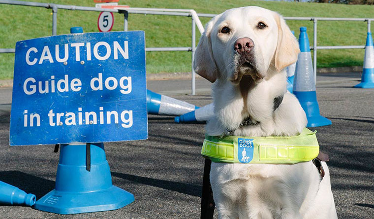 How to train a guide dog