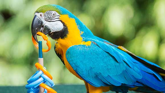 Video: Watch incredible Macaw parrot take on hoopla challenge for Guinness World Records Day