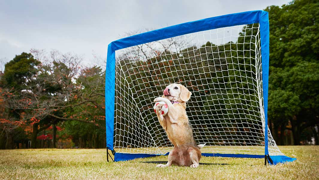 Record Holder Profile Video: Purin, the dog who can catch the most balls