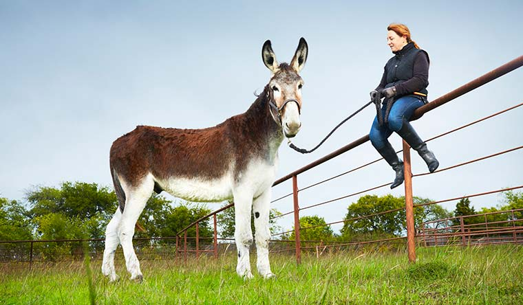 Romulus is the world's tallest donkey at 17 hands (172.72 cm; 5 ft 8 in) tall