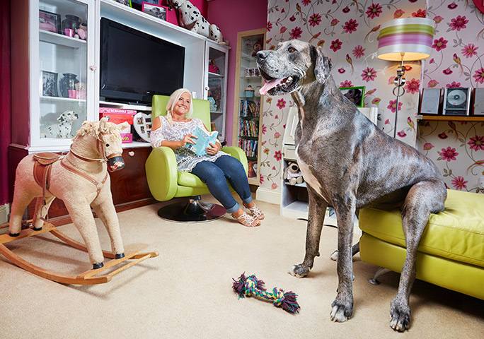 Tallest dog Freddy at home