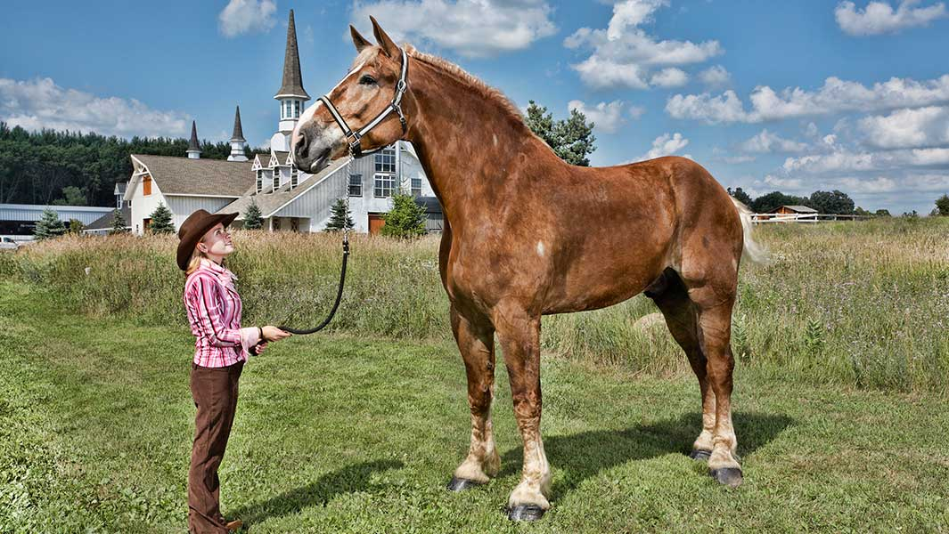 On This Day In 2010 Big Jake The World S Tallest Horse Is Measured Guinness World Records