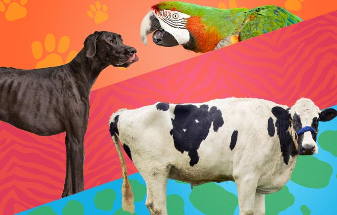 Tallest dog ever, tallest cow and most drink ring pulls removed by a parrot